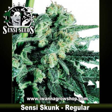 Sensi Skunk Regular - Sensi Seeds - 10 u.
