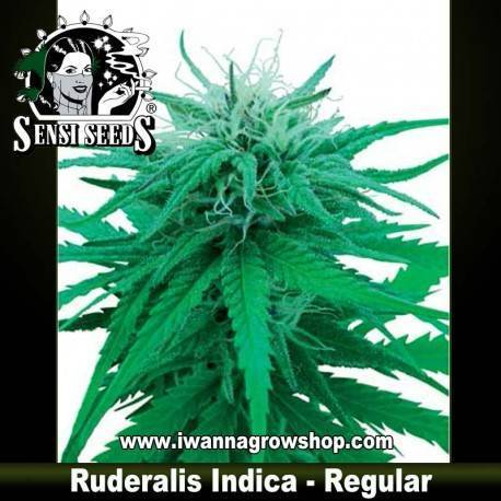 Rudelaris Indica Regular - Sensi Seeds - 10 u.