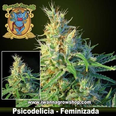 PSICODELICIA (SWEET SEEDS) (Feminizada) (SATIVA)