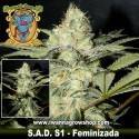 S.A.D. S1 Sweet Afghani Delicious – Feminizada – Sweet Seeds