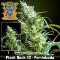 FLASH BACK 2 (SWEET SEEDS) (Feminizada) (SATIVAA)