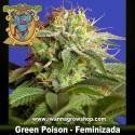 GREEN POISON (SWEET SEEDS) (Feminizada) (INDICA)