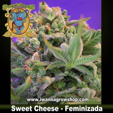 Sweet Cheese feminizada - Sweet Seeds - 3, 5 y 10 u.