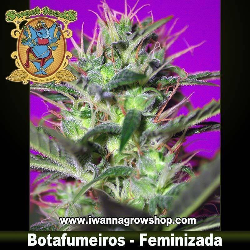 Botafumeiros feminzada - Sweet Seeds - 3, 5 y 10 u.