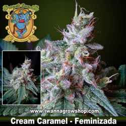 Cream Caramel Feminizada Sweet Seeds