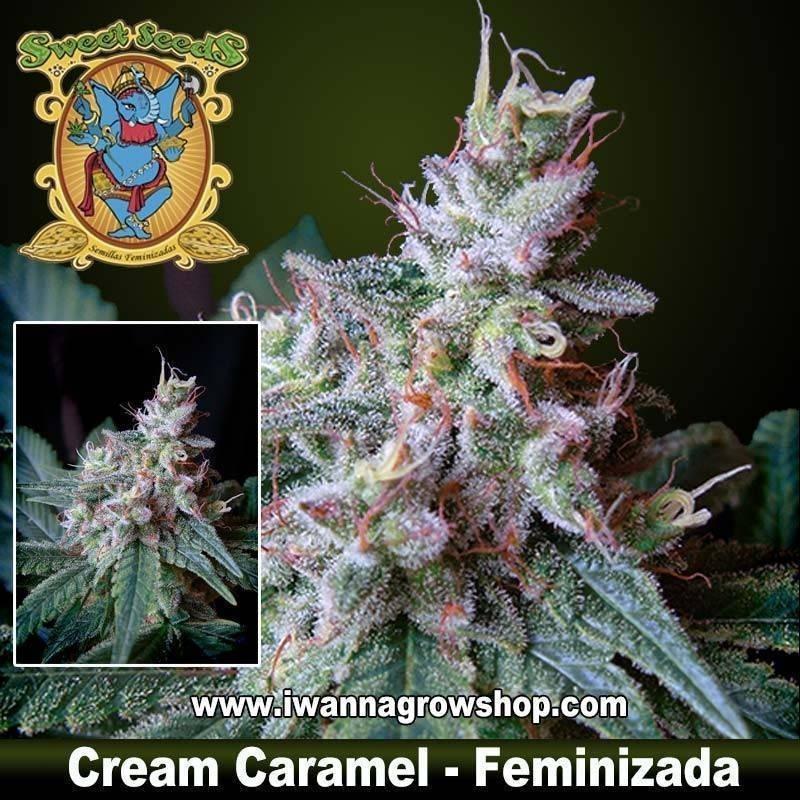 Cream Caramel