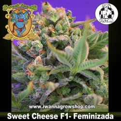 Sweet Cheese F1 Fast Version – Feminizada – Sweet Seeds