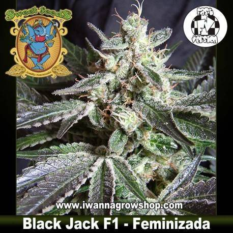 Black Jack F1 Fast Version (Feminizada)