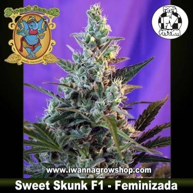 Sweet Skunk F1 Fast Version – Feminizada – Sweet Seeds