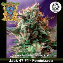 Jack 47 F1 Fast Version