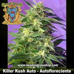 Killer Kush Auto – Autofloreciente – Sweet Seeds