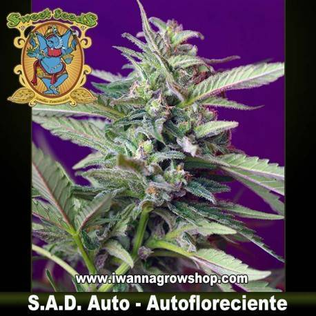 S.A.D. - Sweet Afgani Delicious Auto - Sweet Seeds. 3, 5 y 10 u.