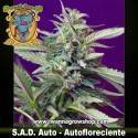 SAD AUTO (SWEET SEEDS) (AUTOMATICA)