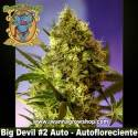 Big Devil 2 Auto – Autofloreciente – Sweet Seeds