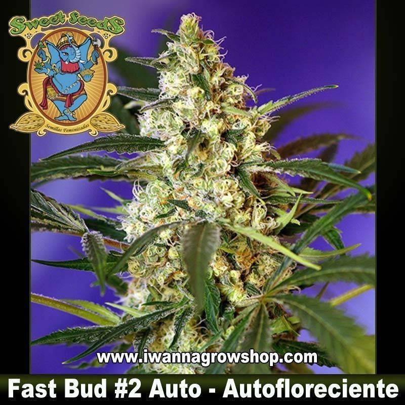 Fast Bud 2 autofloreciente Sweet Seeds. 3, 5 y 10 u.