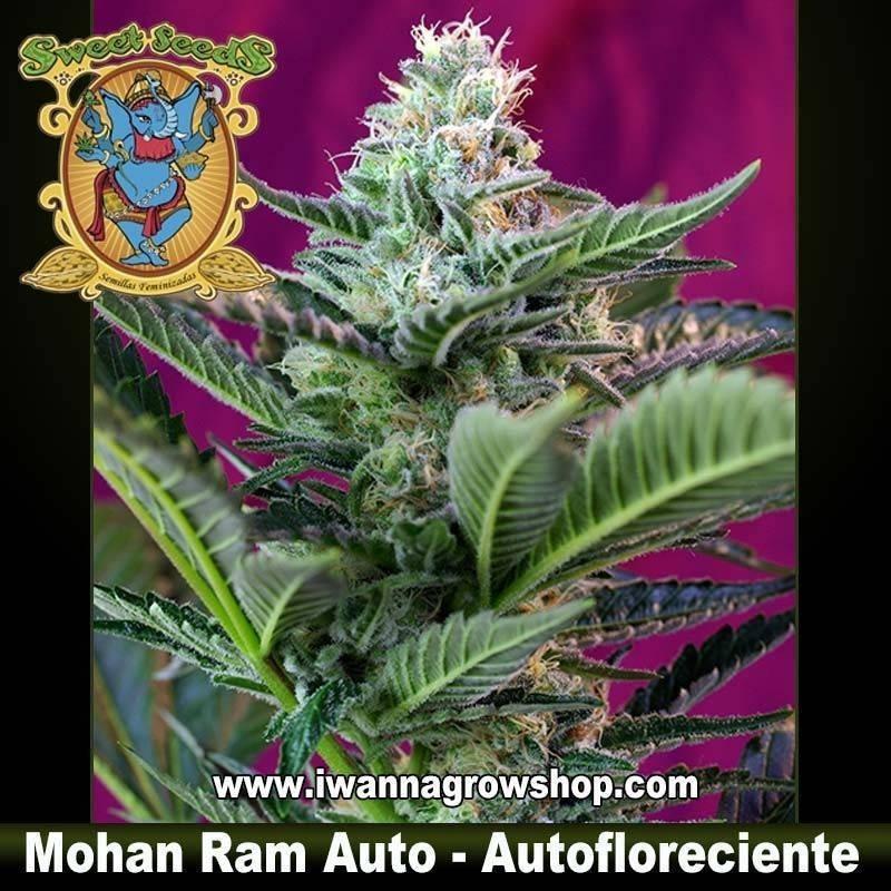 Mohan Ram Auto