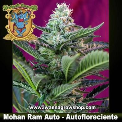 Mohan Ram Auto – Autofloreciente – Sweet Seeds
