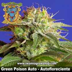 GREEN POISON AUTO (SWEET SEEDS) (AUTOMATICA)