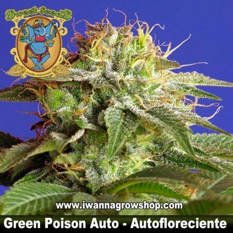 Green Poison Auto - Sweet Seeds - 3, 5 y 10 u.