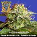 Green Poison Auto – Autofloreciente – Sweet Seeds