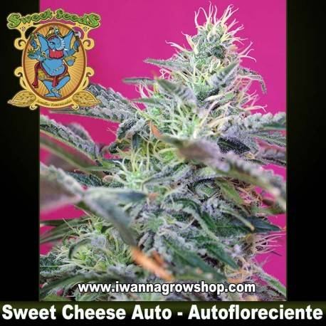 Sweet Cheese Auto - Sweet Seeds. 3, 5 y 10 u.