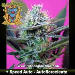 + Speed Auto – Autofloreciente – Sweet Seeds