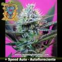 + SPEED AUTO (SWEET SEEDS) (AUTOMATICA)