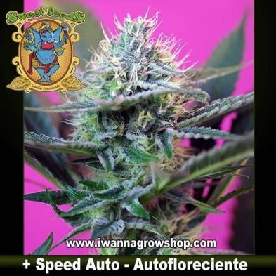 + Speed Auto – Autofloreciente – Sweet Seeds
