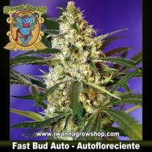 Fast Bud Auto – Autofloreciente – Sweet Seeds