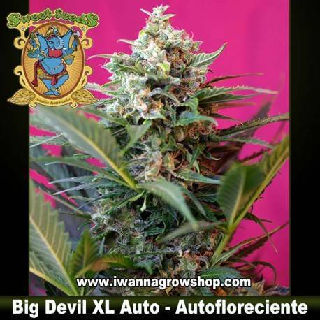 BIG DEVIL XL AUTO