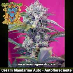 Cream Mandarine Auto – Autofloreciente – Sweet Seeds