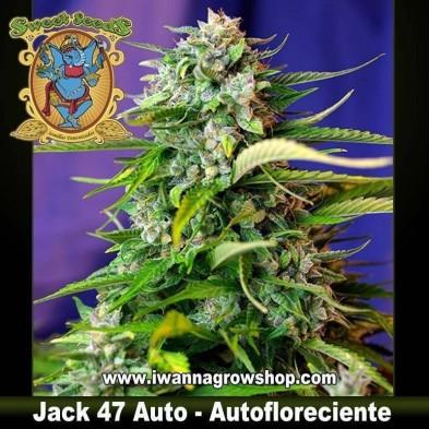 Jack 47 Auto – Autofloreciente – Sweet Seeds