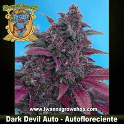 Dark Devil Auto – Autofloreciente – Sweet Seeds
