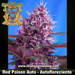 Red Poison Auto – Autofloreciente – Sweet Seeds