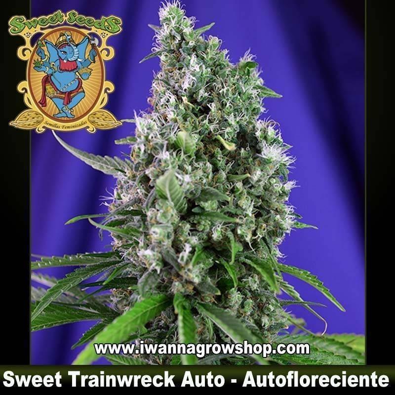 Sweet Trainwreck Auto
