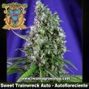 Sweet Trainwreck Auto – Autofloreciente – Sweet Seeds