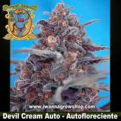 Devil Cream Auto – Autofloreciente – Sweet Seeds