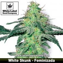 White Skunk – Feminizada