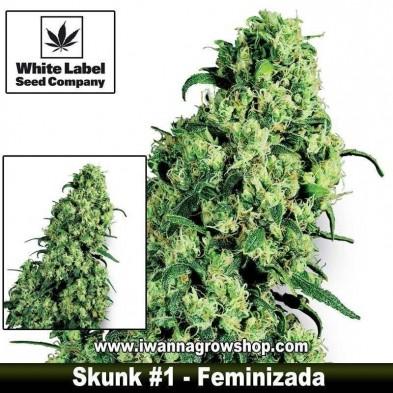 Skunk 1 – Feminizada