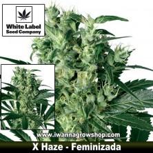 X Haze – Feminizada
