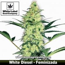 White Diesel – Feminizada