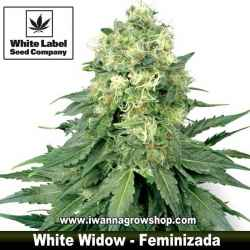 White Widow – Feminizada