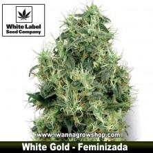 White Gold – Feminizada