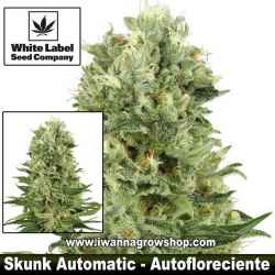 Skunk Automatic – Autofloreciente