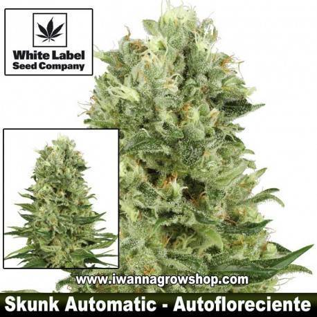Skunk Automatic