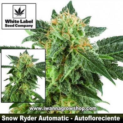 Snow Ryder Automatic – Autofloreciente