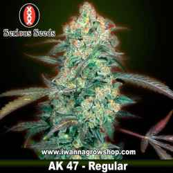 Ak47 – Regular – Serious Seeds