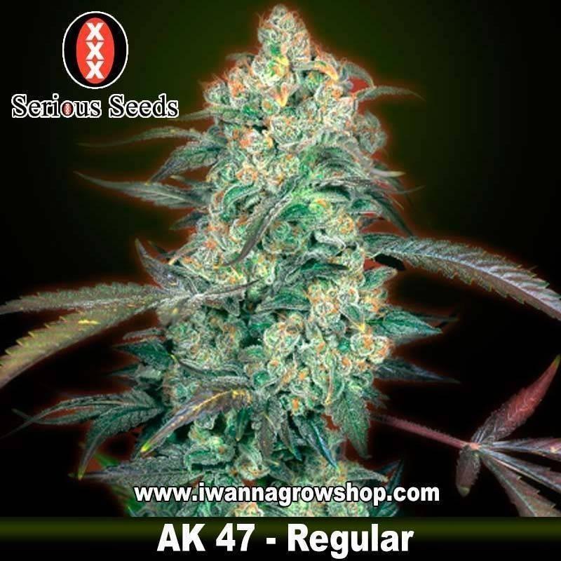 Ak47 Regular