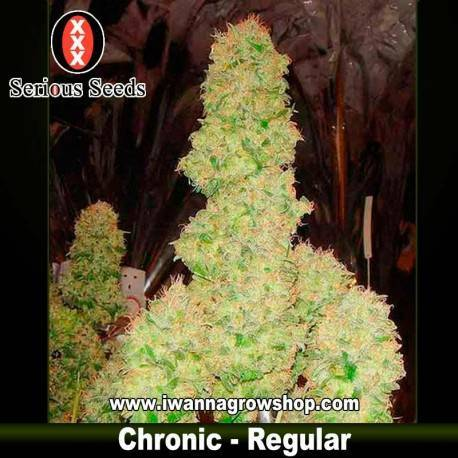 Chronic – Serious Seeds – Regular