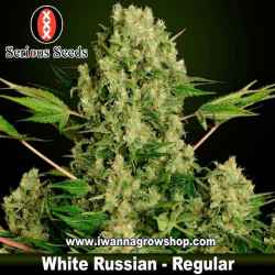 White Russian – Regular – Serious Seeds